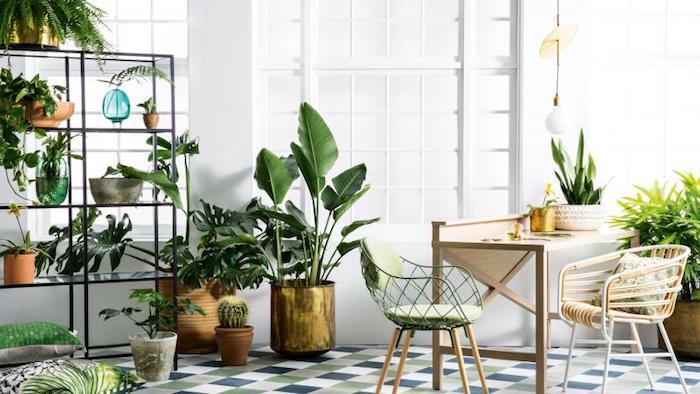 Ein Esszimmer mit viele Pflanzen die indirektes Licht brauchen Zimmerpflanzen für wenig Licht