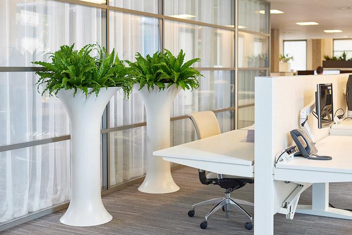 zwei Blumentöpfe voller grüne Pflanzen für dunkle Räume ein modernes Büro
