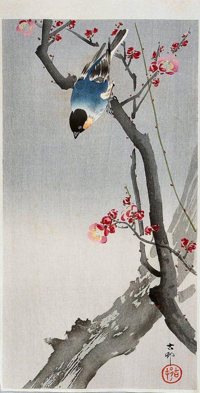 japanische Zeichnung, ein blauer Vogel, Kohlmeise auf einem Kirschbaum