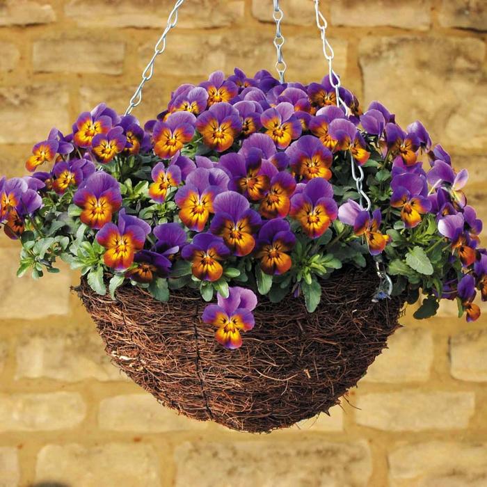 Korb mit kleinen Veilchen in Lila und Orange, den Balkon bepflanzen und dekorieren, schöne Ideen