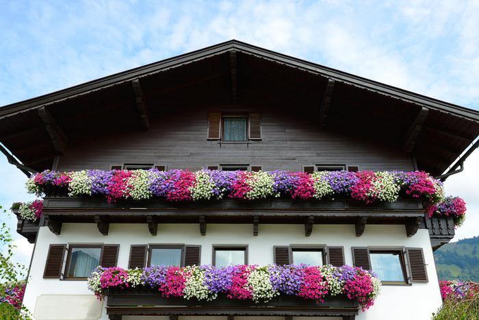Petunien in drei Farben, Terrassen bepflanzen, Villa mit vielen Blumen