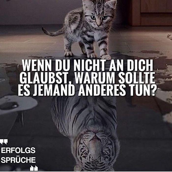 sprüche motivation katze gegen tiger glaube an dich selbst und erfahre deine stärke