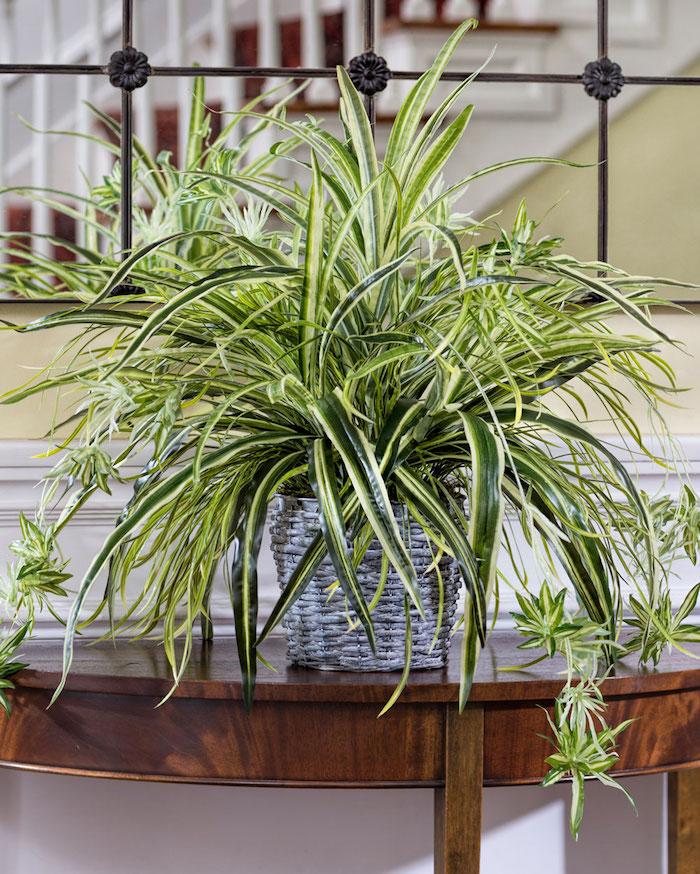 Pflanzen für dunkle Ecken Grünlilie auf einem Tisch neben das Treppenhaus