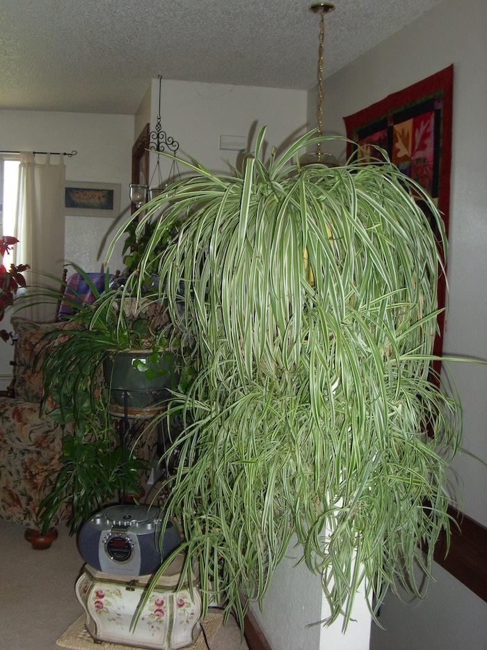 Vintage Interior mit viele alte Gegenstände Pflanze für dunkle Ecken - große Grünlilie