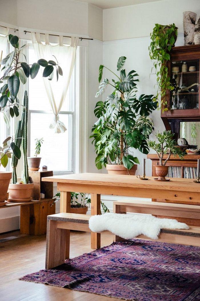 gemütliches Esszimmer mit viele Pflanzen die Schatten verlangen Pflanzen für dunkle Ecken