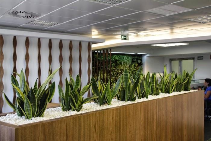 Pflanzen für dunkle Ecken - eine Ecke im Büro von Pflanzen viel Stück Bogenhanf