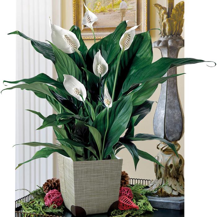 Zimmerpflanzen f r dunkle ecken home ideen - Zimmerpflanzen fur schatten ...
