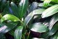 60 super Zimmerpflanzen für wenig Licht und ihren Platz in der Wohnung