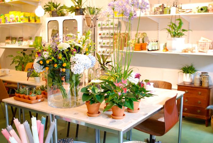 bunte Blumen die auch im Winter wachsen - Pflanzen für dunkle Räume Anthurium