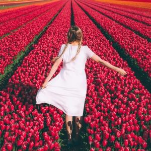 Blumenarten von A bis Z - die Blumenwelt näher kennenlernen