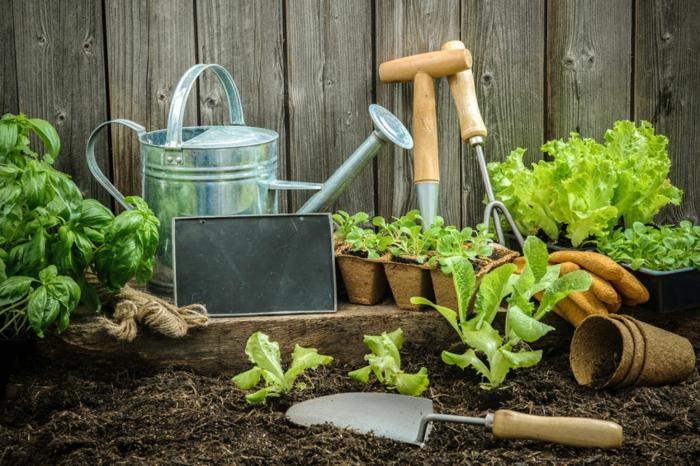 Ausrüstung für Hobbygärtner, die wichtigsten Gartengeräte, Tipps für Hobbygärtner, Obst und Gemüse selber anbauen