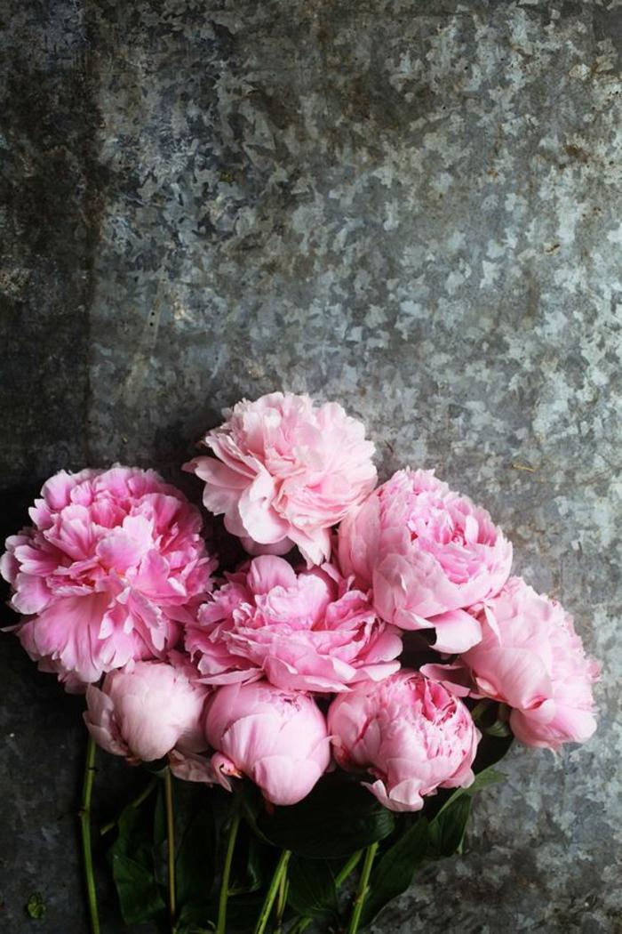 rosafarbene Pfingstrosen, die perfekte Blumen für Hochzeitssträusse, Vintage-Stil