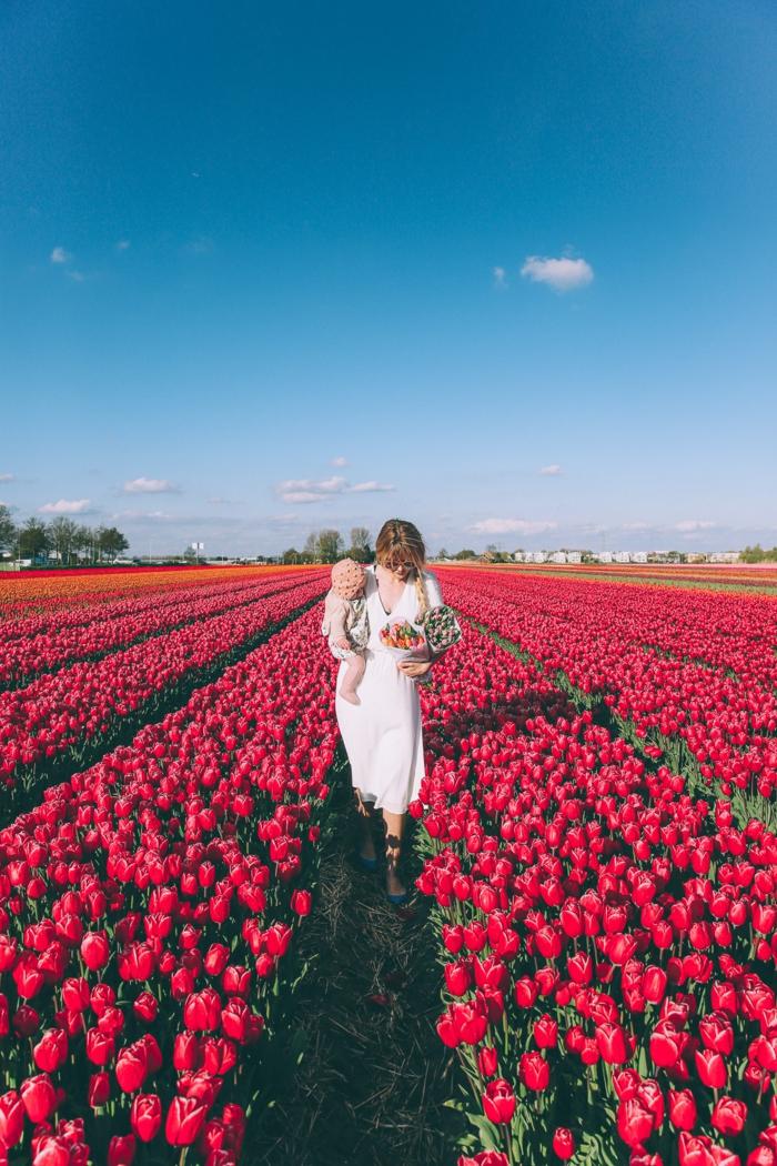 Tulpenfelder in Holland, zahlreiche, rote Tulpen, Frau mit Baby, zwei Blumensträusse