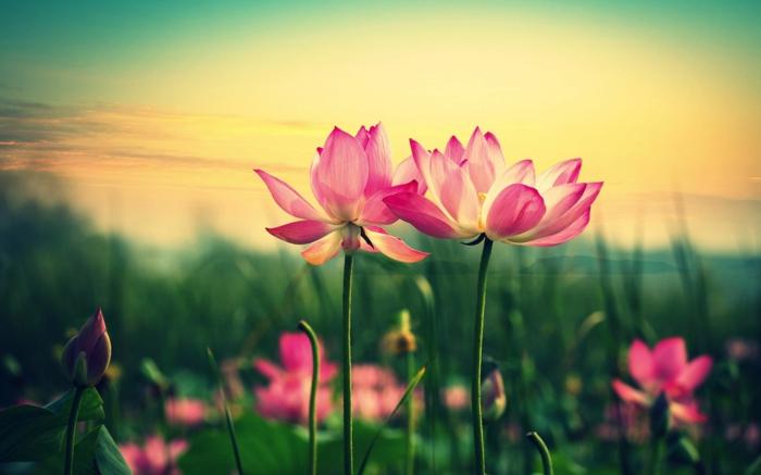 1001 Blumenarten Bilder Und Interessante Fakten