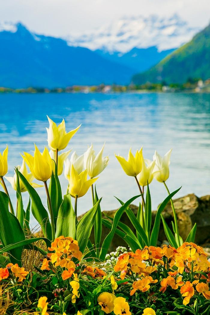 wunderschönes Landschaftsbild, gelbe Tulpen und orange Veilchen, See und Gebirge im Hintergrund