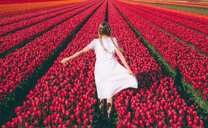 Tulpenfelder in Holland, Mädchen mit weißem Kleid und zwei Zöpfen, zahlreiche, rote Tulpen