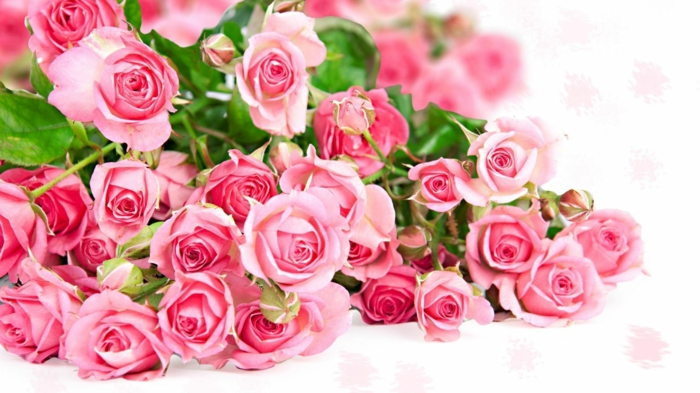 rosafarbene Rosen, wunderschöner Rosenstrauss, Hintergrundsbilder mit Blumen