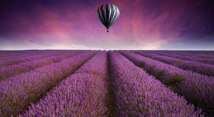 wundercchönes Hintergrunsbild in Lila, Lavendelfelder und Ballon, romantisches Landschaftsbild