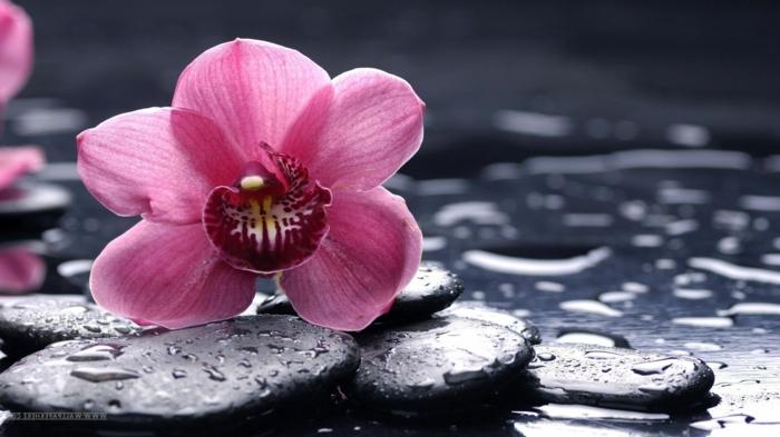 Wallpaper steine blumen  ▷ 1001 Blumenarten + Bilder und interessante Fakten