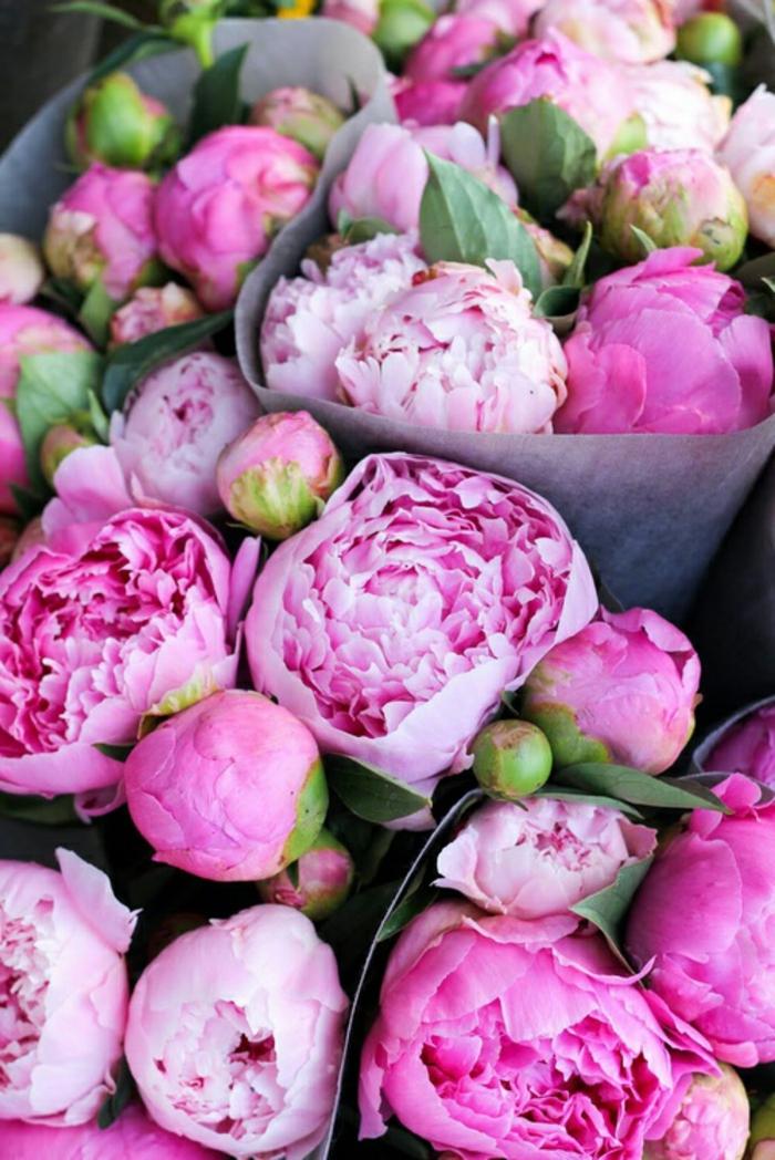 Pfingstrosensträusse, die perfekte Blume für Hochzeitsstrauss, große, rosarbene Blüten
