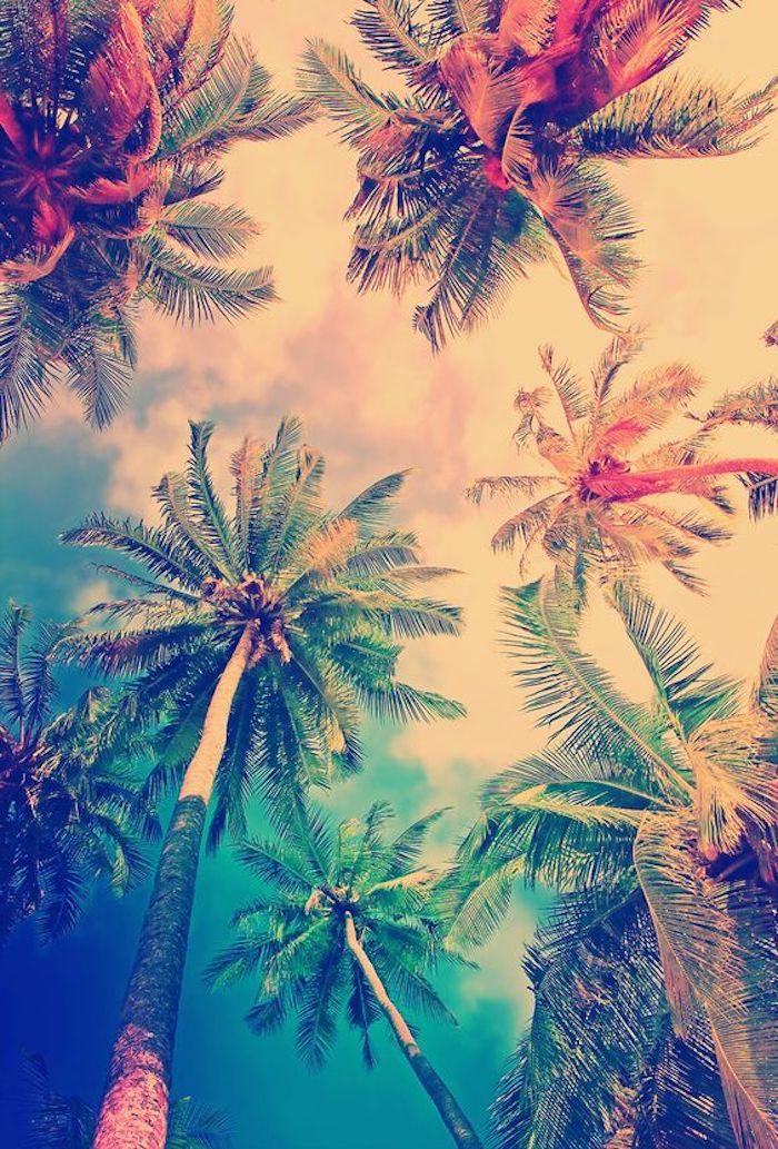 Sommer, Meer, hohe Palmen mit grünen Kronen, blau-weißer Himmel