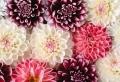 Blumenarten von A bis Z – die Blumenwelt näher kennenlernen