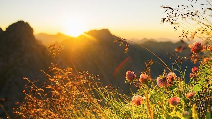 schöne Landschaft, Sonnenuntergang, Distelwiese im Gebirge