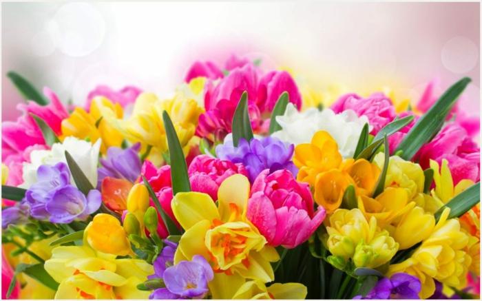 wunderschöne Frühlingsblumen, Tulpen, Freesien und Narzissen in verschiedenen Nuancen