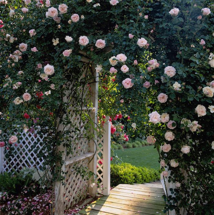 gartengestaltung kleine gärten, weißer gartenzaun dekoriert mit rosen, holzzaum