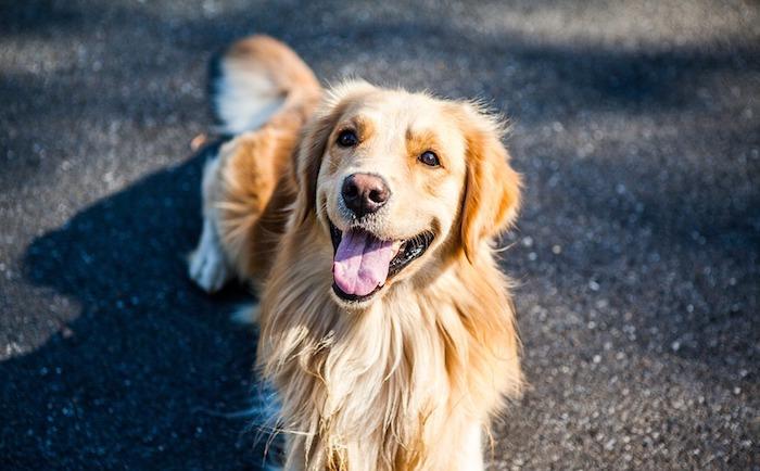 Hunde Kausnacks für glückliche und gesunde Hunde