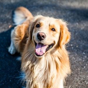 Hunde Kausnacks für glückliche und gesunde Lieblinge