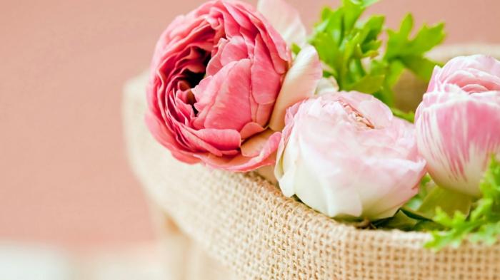 rosafarbene Kamelien im Korb, schönes Geschenk für die liebe Frau, große Blüten in verschiedenen Nuancen