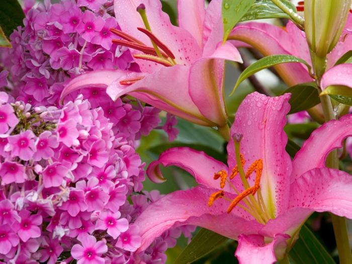 rosafarbene Sommerblumen, wunderschöne Blüten, Blumenarten von A bis Z, Hintergrundbild in Rosa