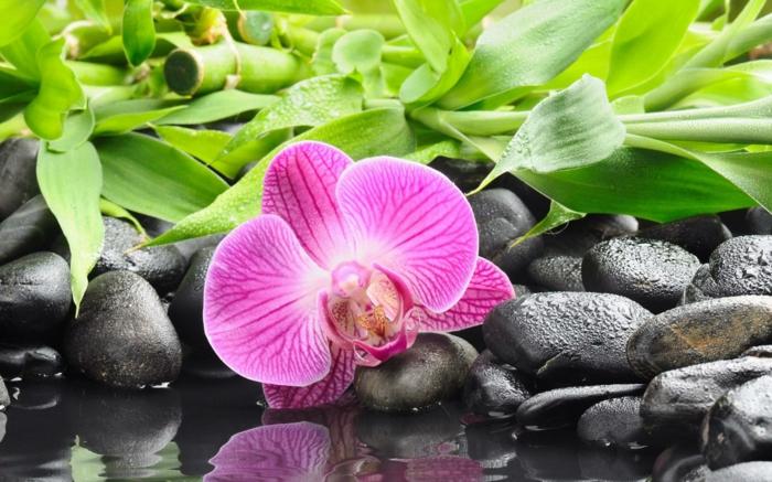 violette Orchidee, Bambus und kleine Steine im Hintergrund, Hintergrundbilder mit verschiedenen Blumenarten