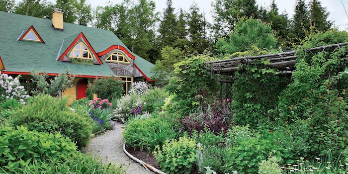 vordergarten gestalten mit vielen grünen pflanzen, gartendesign