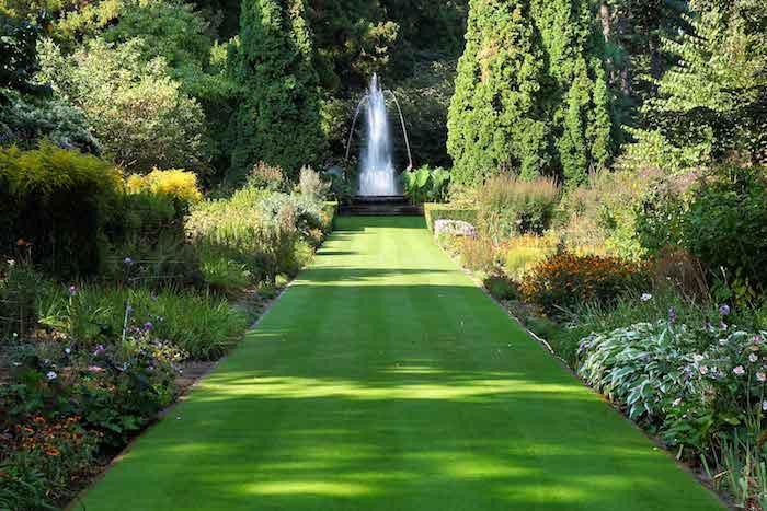 pflegeleichter garten mit grünen pflanzen und fontäne, hintergarten