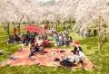 Das Picknick – ein Vergnügen für die Sinne und die Seele