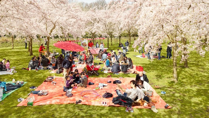 Picknick, Familienversammlung, roter Sonnenschirm, japanische Tradition