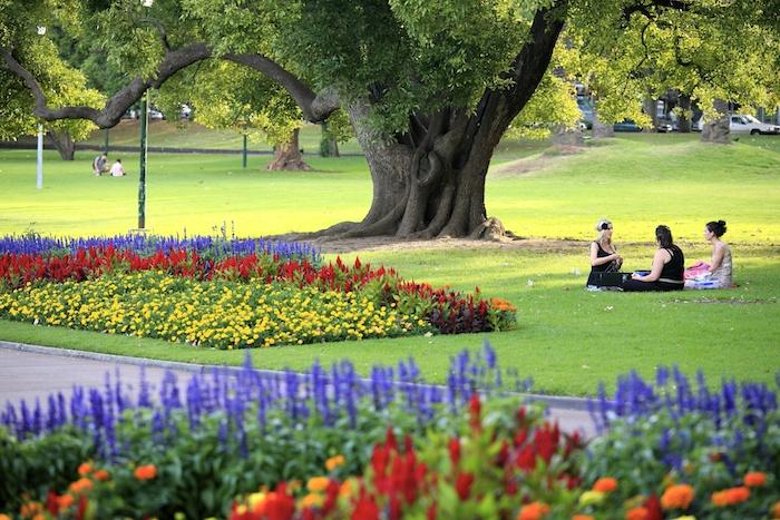 drei Freundinnen, rote, lila, gelbe und Orange Blumen, riesiges Baum