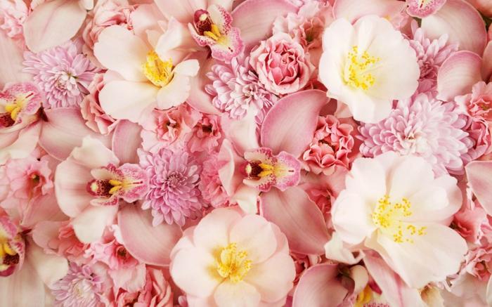 rosafarbene Blumen, Orchideen und Chrysanthemen, Blumenliste von A bis Z, Bilder und Informatioen zum Thema Blumenarten