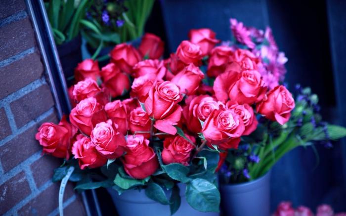Rosenstrauss, Rosen verschenken, rote Blüten, das perfekte Geschenk für die liebe Frau