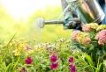 Tolle Pflanzsteine für Ihren eigenen Garten
