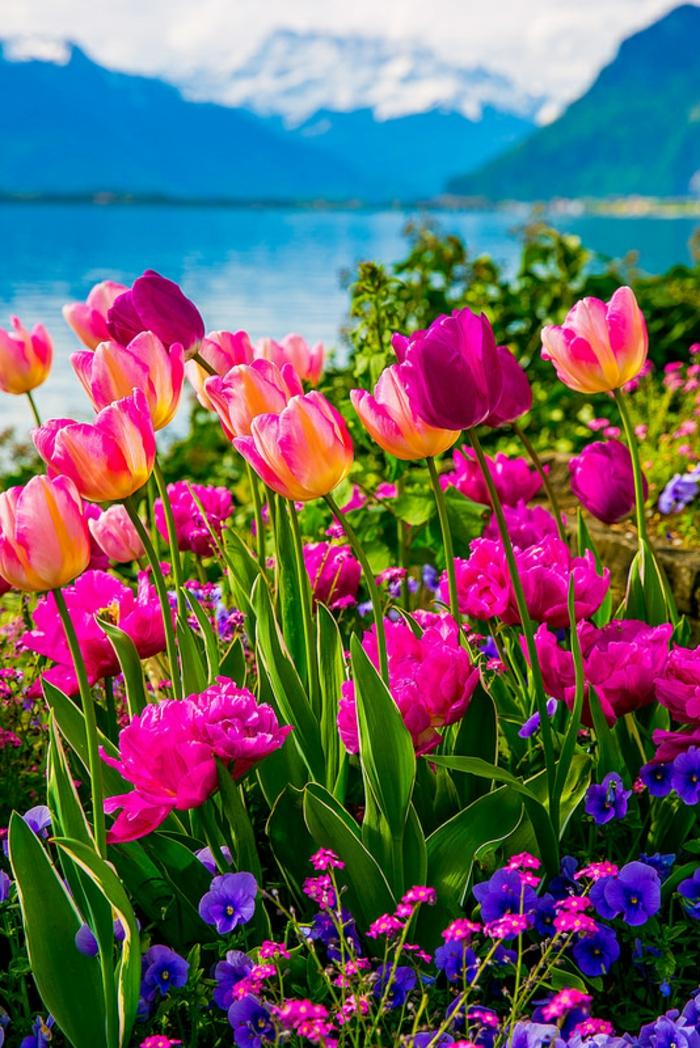 bunte Tulpen und Veilchen, See und Gebirge im Hintergrund, prachtvolle Landschaftsbilder, die Natur spüren