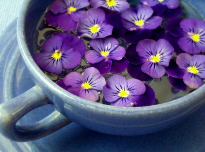 Veilchen in Porzellantasse, Hintergrundbilder für Blumenliebhaber, die Natur spüren