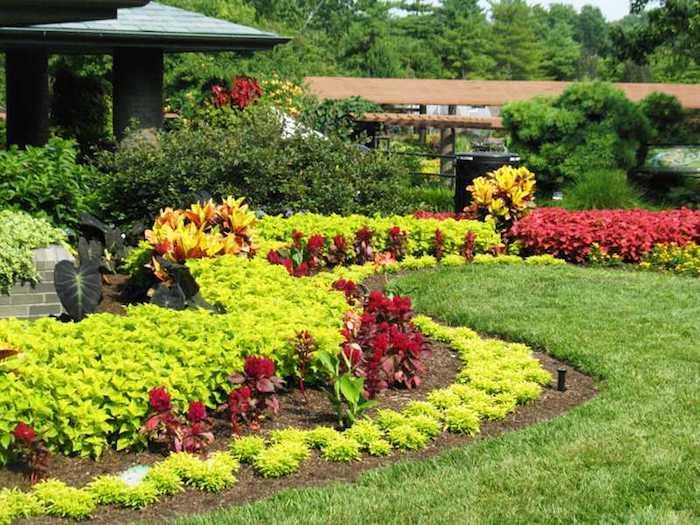 vordergarten pflegeleicht gestalten, viele dekorative gartenpflanzen und -blumen