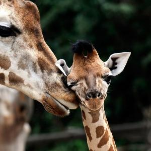 Niedliche Tiere - Mutterliebe im Tierreich