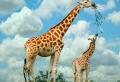 Niedliche Tiere – Mutterliebe im Tierreich