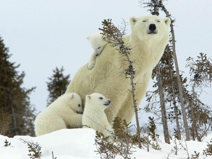 niedliche Tiere, Mutterliebe im Tierreich, süße Tierbabys und ihre Mama, Bärenfamilie, schöne Bilder