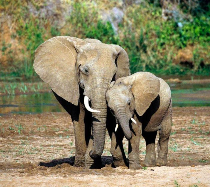 Elefanten- Baby und seine Mutter, Mutterliebe im Tierreich, niedliches Tierbaby, schöne Bilder