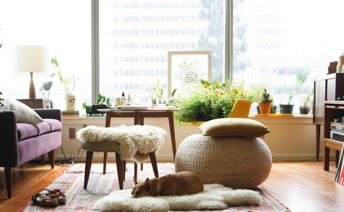 sitz kissen idee schlafender hund auf dem fellteppich designer möbel lila sofa große fenster